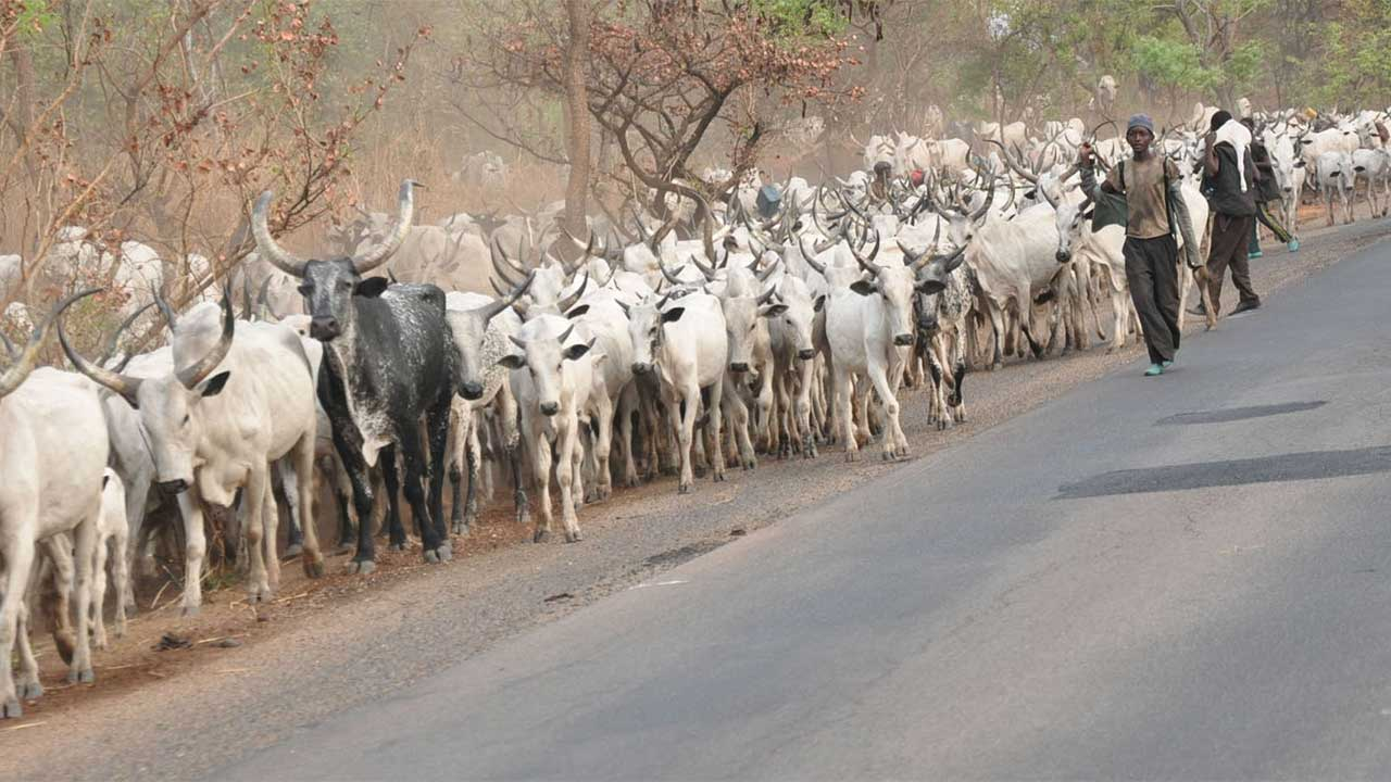 Ketu Professionals call for proscription of open grazing in Ogun state